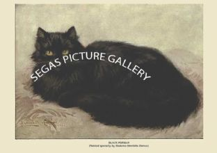 BLACK PERSIAN (Painted specially by Madame Henriette Ronner)